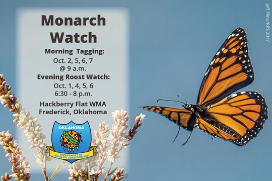 Monarch Watch 2019