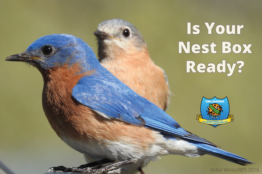 Is Your Nest Box Ready?