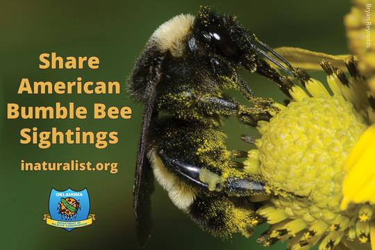 American Bumble Bee Promo