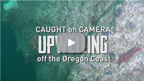 Upwelling Video