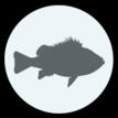 fishone