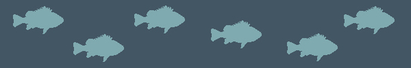 fish banner