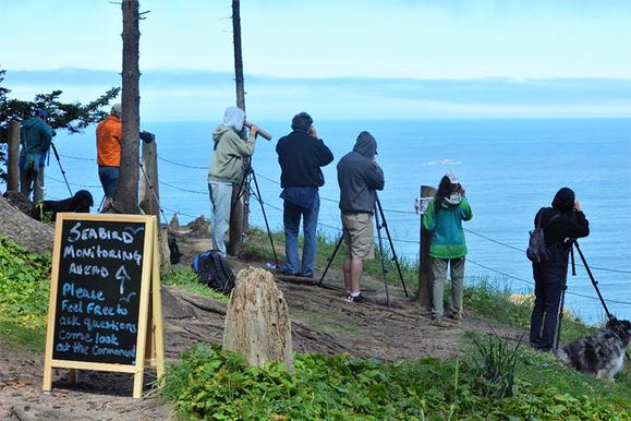Citizens conducting seabird monitoring surveys