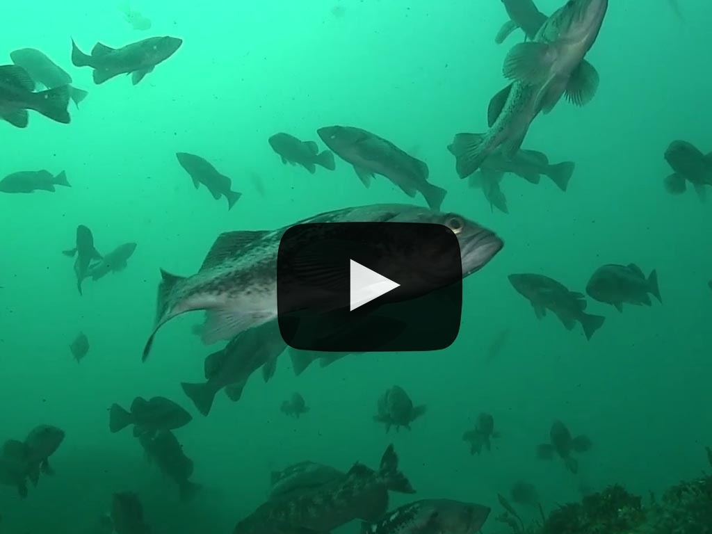 video uploads