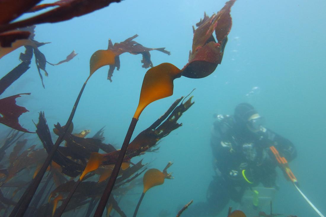 SCUBA diver conducting monitoring surveys