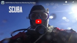 Click to view video looking at ODFW marine reserve monitoring surveys