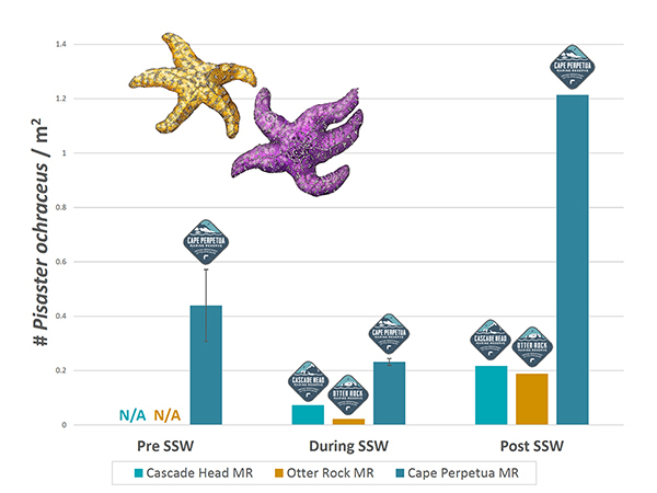 Graph showing Ochre Sea Star densities before, during, after sea star wasting
