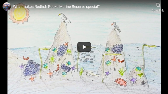 "Watch Video ""What Makes Redfish Rocks Marine Reserves Special?"""