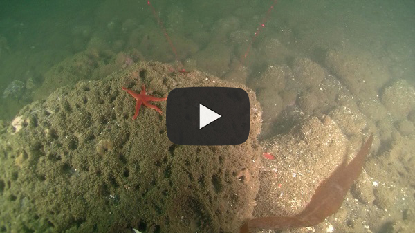 ROV video footage at Redfish Rocks
