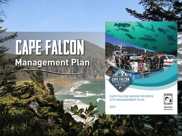 Cape Falcon Management Plan