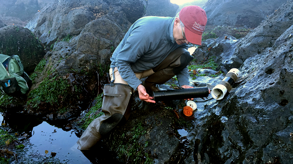 Dick Vander Schaaf retrieves a sensor that is monitoring pH levels in the intertidal zone at Cascade Head Marine Reserve