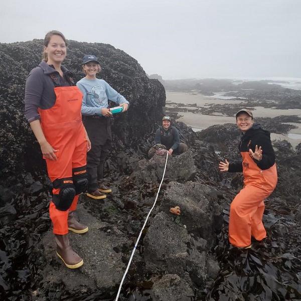 Team members in the rocky intertidal conducting sea star surveys