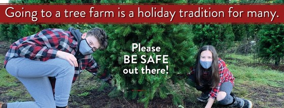 Going to a tree farm is a holiday tradition for many