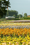 Cascades train in valley with flowers
