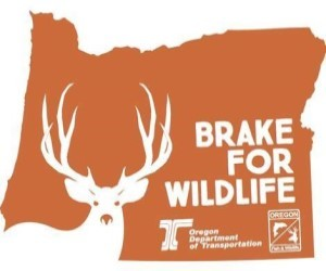 Brake for wildlife - deer migration