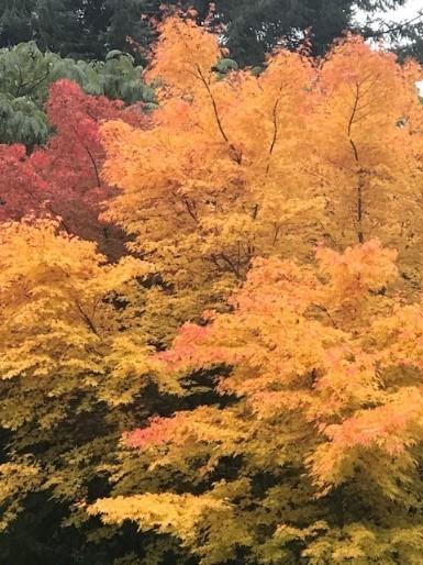 Fall Image - Autumn Leaves