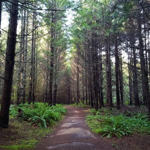 Stub Stewart State Park