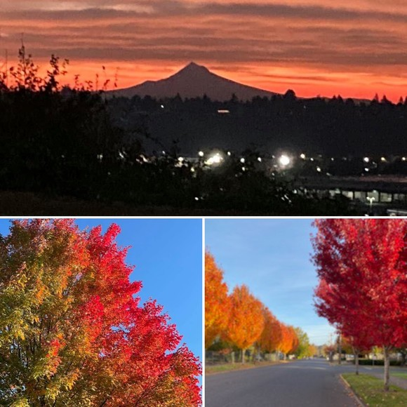 Fall foliage in Forest Grove and Mt Hood Sunrise