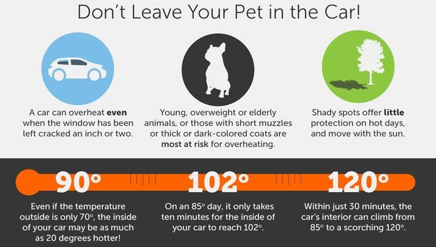 Don't Leave Your Pet in the Car Infographic