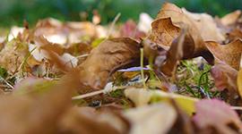 Leaf Haul
