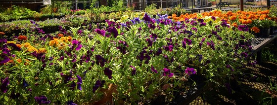 Flowers at the Fresh Start Market