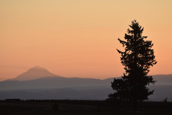 hazy day in Oregon with mountain on horizon and tree in foreground.