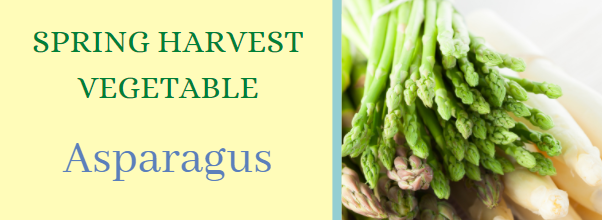 harvest vegetable banner