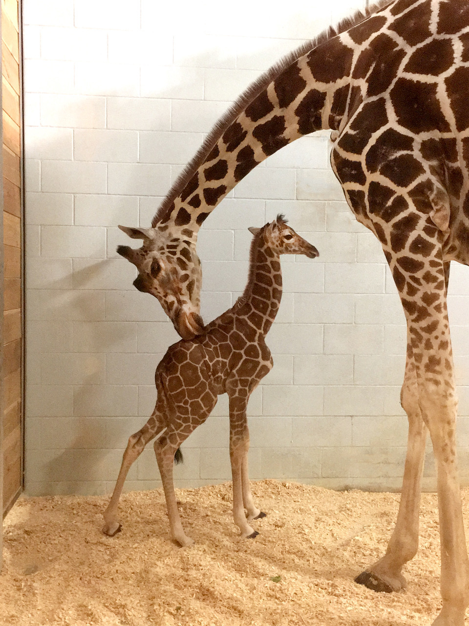 Daisy and baby at Como Zoo
