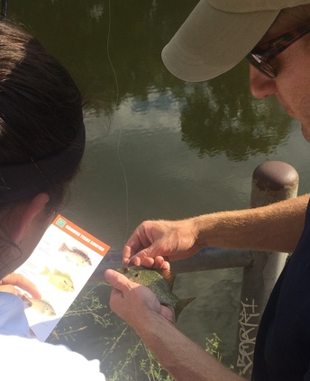 Instructor helps middle school student identify sunfish caught during after school fishing trip