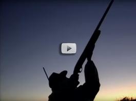 Shotgun safety video