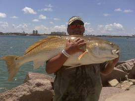Giant redfish