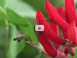 Pollinator conservation video