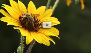 Bee block condo video