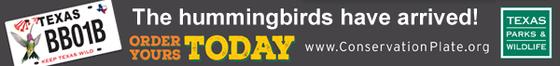 Hummingbird License Plate