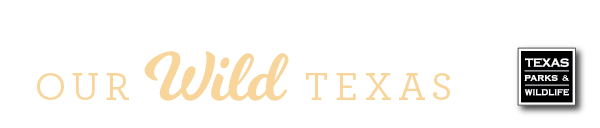 Our Wild Texas cream dropshadow transparent