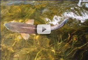 fish in seagrass