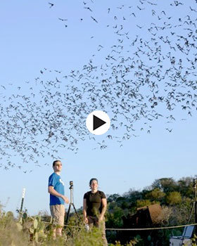 bat viewing