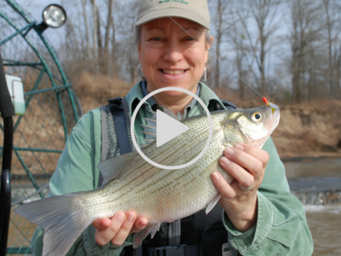 Woman holding large white bass, link to video