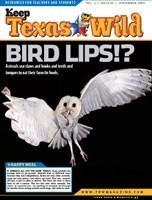 KTW Bird Lips