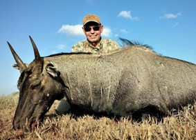 Hunter and nilgai