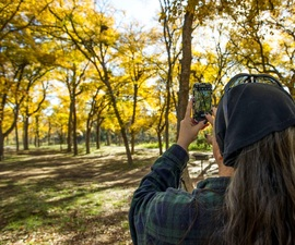 woman photographing gold trees with iPhone at McKinney Falls State Park