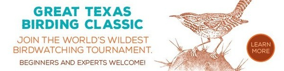 Great Texas Birding Classic link