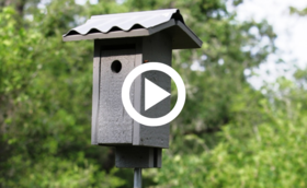 build a bluebird nest box video link