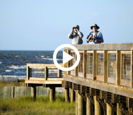 wildlife viewing platform above the marsh, video