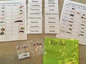 Picture of macroinvertebrate and fly matching activity