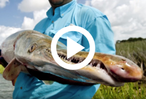 snout of gar being held by man, video link