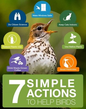 7 Simple Actions to Help Birds