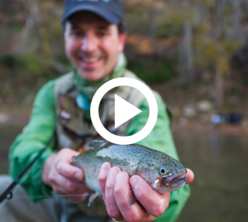 man holding rainbow trout, video link