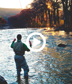 man fly fishing in river with autumn color, video link