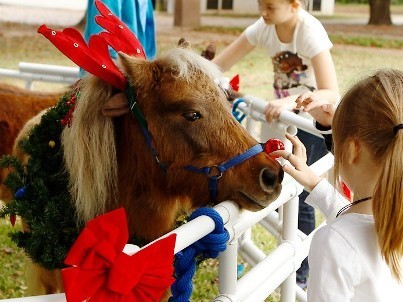 Barrington SP - child pets Xmas pony